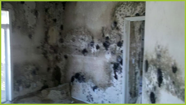 PureSpace offers a warranty for our work, including mold removal.