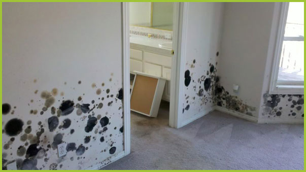 Mold Prevention by PureSpace