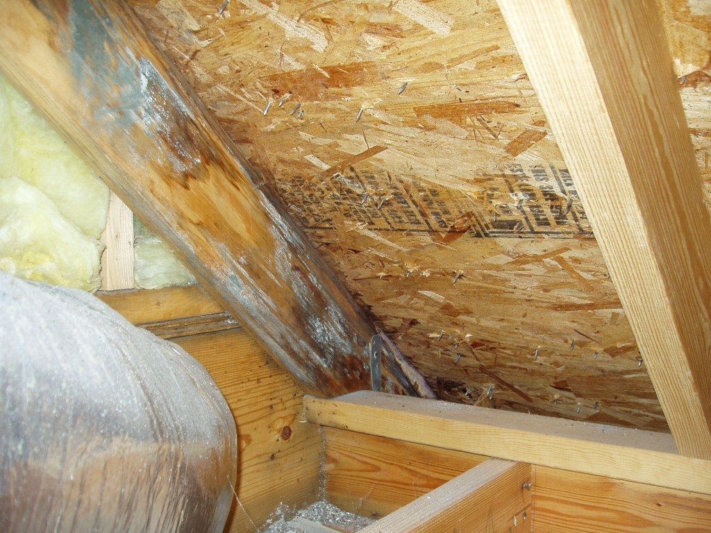 Dealing with attic mold pure space - How to deal with mold ...