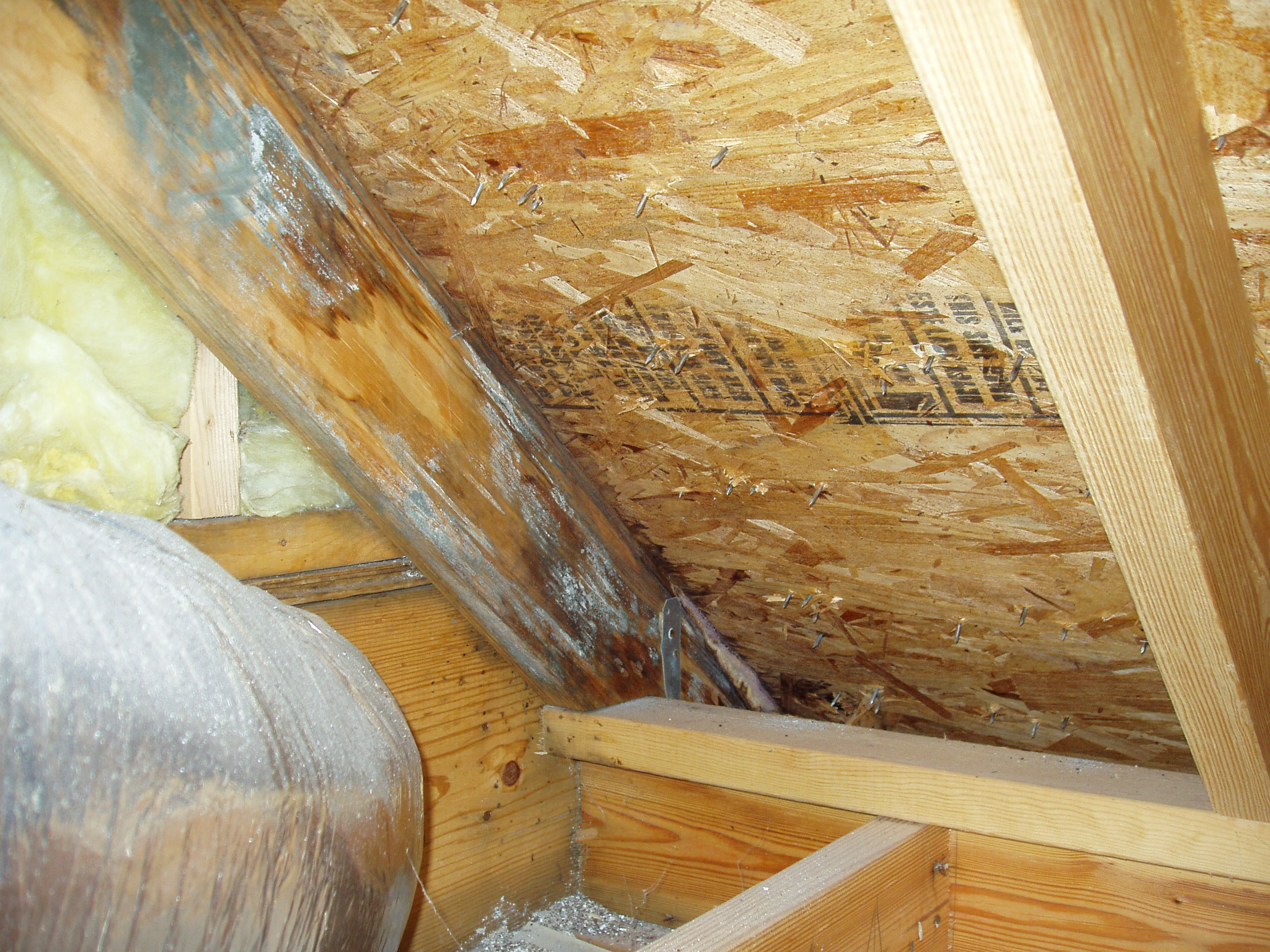 Dealing With Attic Mold